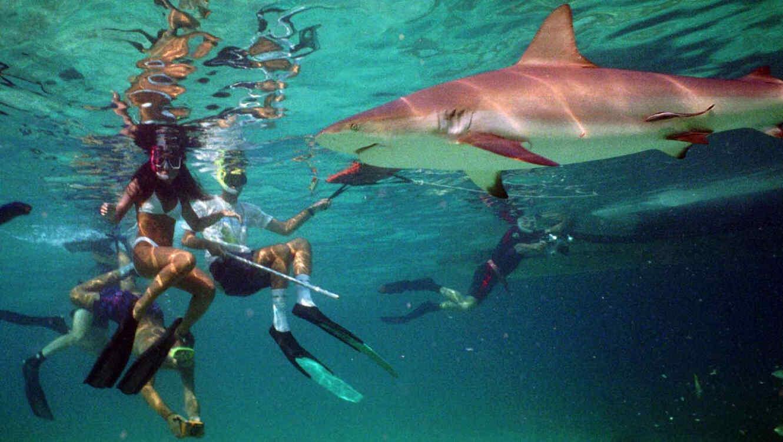 El niño originario de Utah se encontraba nadando en aguas relativamente poco profundas cuando el tiburó mordió su hombro.