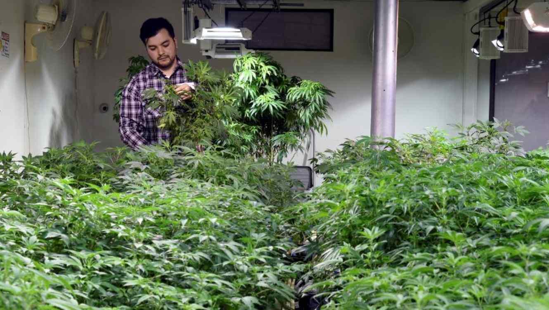 Oswaldo Barrientos este miércoles en las instalaciones donde trabaja cerca del centro de Denver.