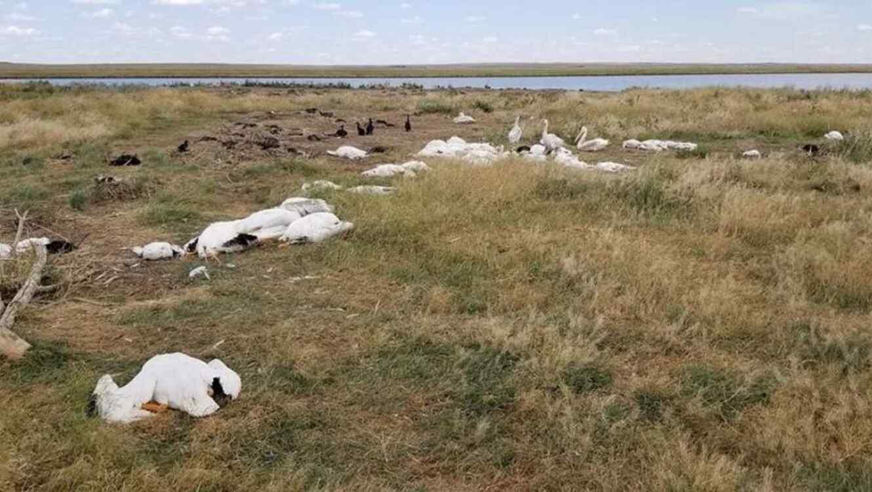 Aparecen aves muertas en Montana