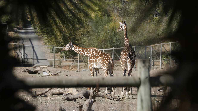 Amor Voraz varias jirafas, antílopes y jabalíes mueren en un incendio