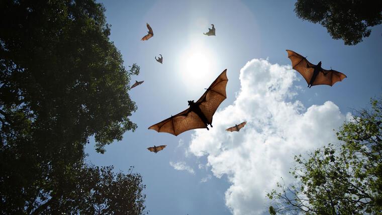 murcielagos volando