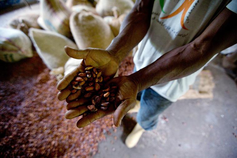 Un trabajador muestra unos granos de cacao.