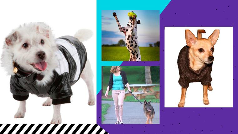 Ofertas en collares, correas, juguetes y ropa para perros: las mejores rebajas en artículos para mascotas
