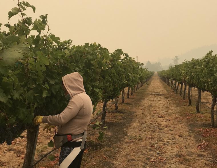 Una trabajadora en un campo de Oregon.