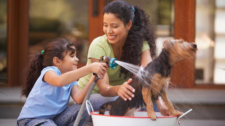 Lo que necesitas para mantener tu hogar y perro limpios | Telemundo