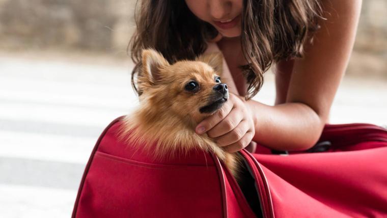 Mujer acariciando a su mascota