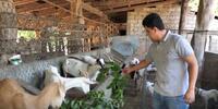 Emprendedor cría cabras para superar la crisis por la pandemia
