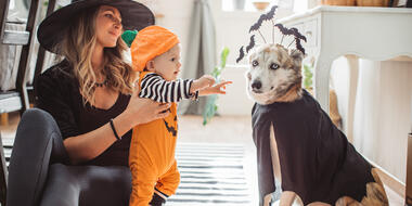 Disfraces de Halloween para perros, gatos y más mascotas | Telemundo