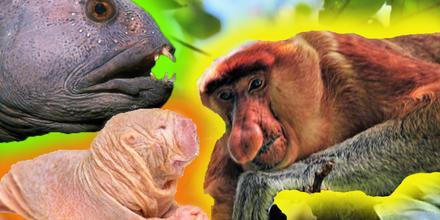 Animales más feos del mundo