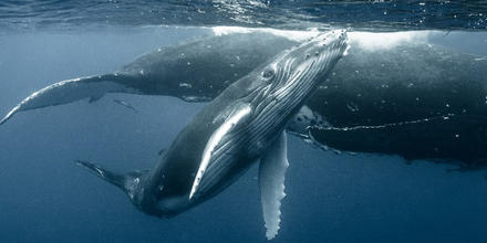 Ballenas más pequeñas