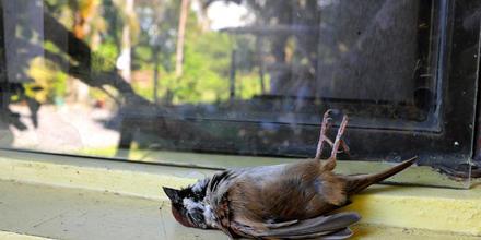 Aves chocan contra edificios