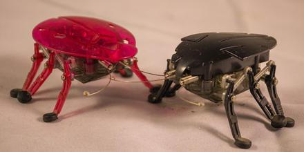 Robots cucaracha
