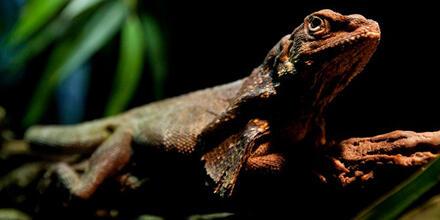 Origen de reptiles