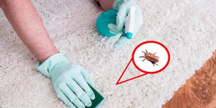 Infestación de pulgas