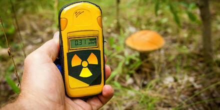 Hongos con radioactividad