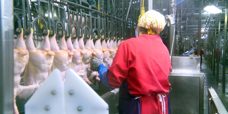 Una trabajadora en una planta de pollo en Spingdale, Arkansas.