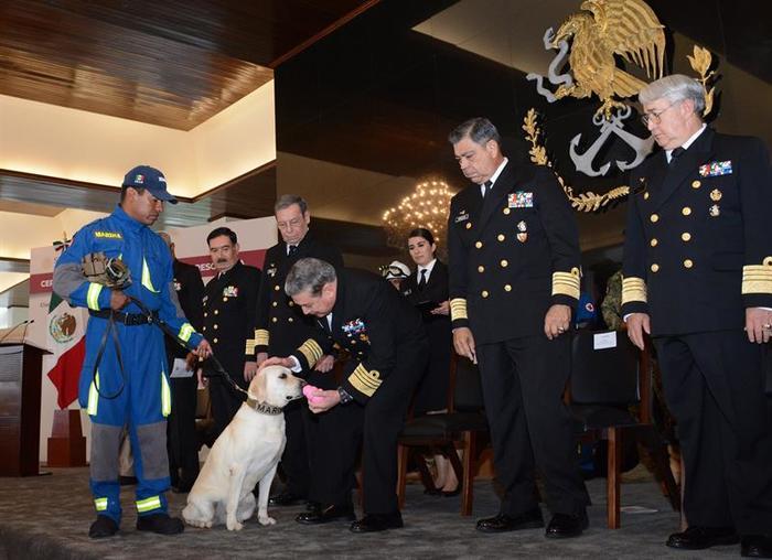 Frida, la perra rescatista de la Marina mexicana, durante una ceremonia en honor de los rescatistas en la Ciudad de México.