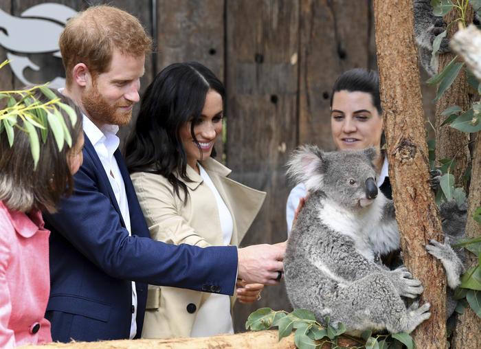 Los duques de Sussex acarician a un koala durante su visita al zoológico de Taronga en Sidney.