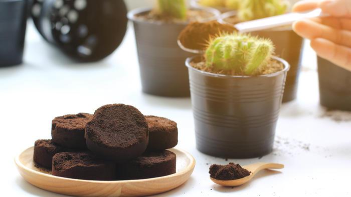 Café como fertilizante
