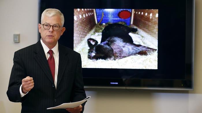 El abogado Guy Cook habla sobre el conejo Simón que murió en un vuelo aéreo