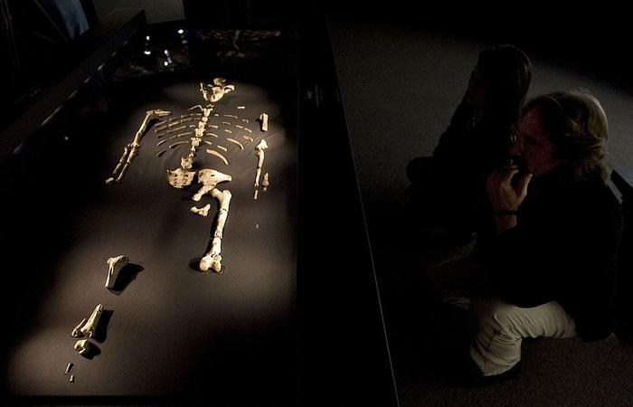 """""""lucy"""" exhibit to open in houston amid protests"""