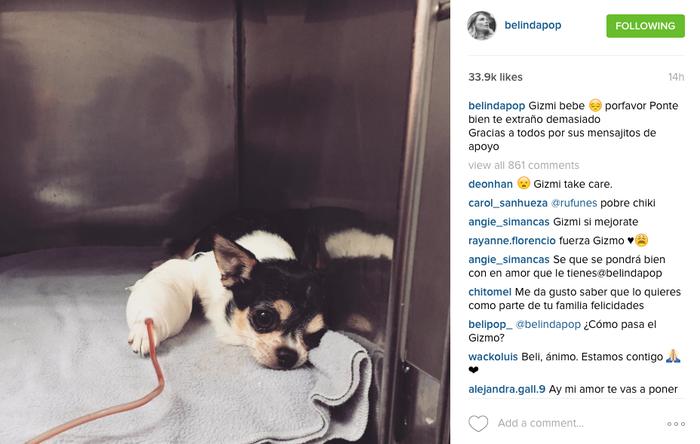 Mensaje de Belinda a Gizmo, su perro