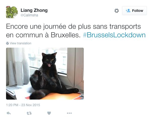 El hashtag #BrusselsLockdown (Operativo en Bruselas) de pronto pasó de serio a humorístico y comenzaron a circular por Twitter fotos de gatos inocentes en toda clase de situaciones