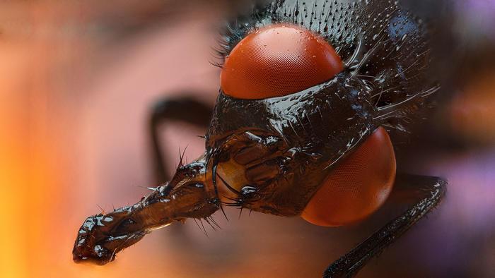 Mosquito Covid-19
