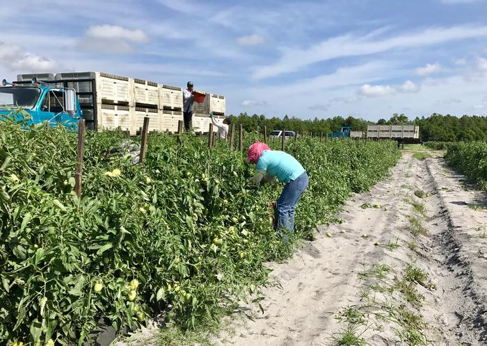 Maricela, trabajadora agrícola