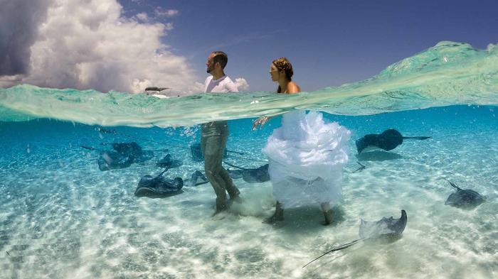 STINGRAY WEDDING PHOTOBOMB