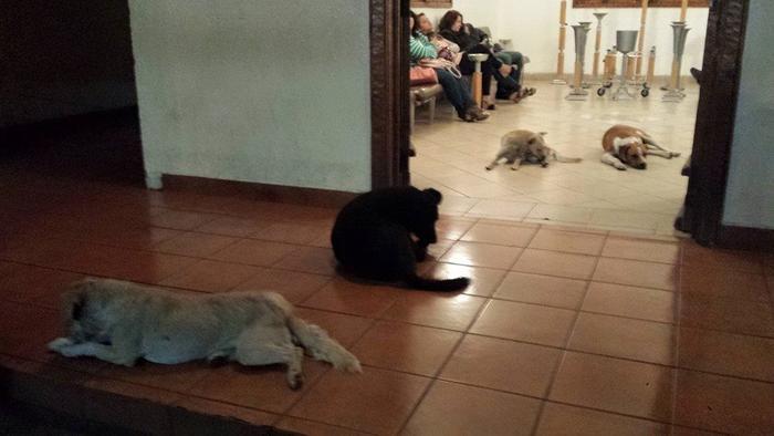 Perros callejeros esperan en velorio