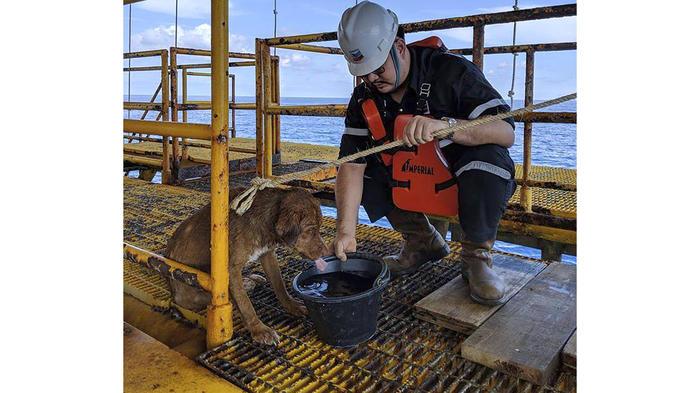Un perro sobrevivió nadando 217 km mar adentro — Tailandia