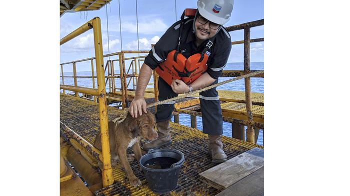 Rescatan perro que sobrevivió nadando mar adentro en Tailandia