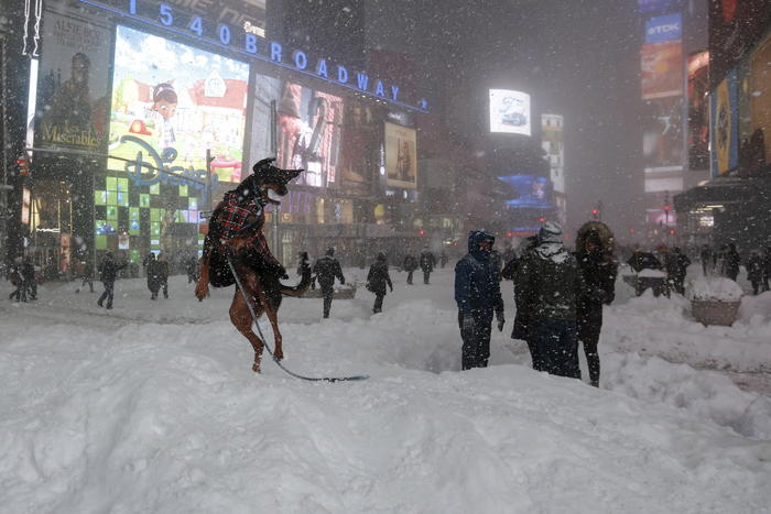 A dog plays with a snowball during a snow storm in Times Square in the Manhattan borough of New York