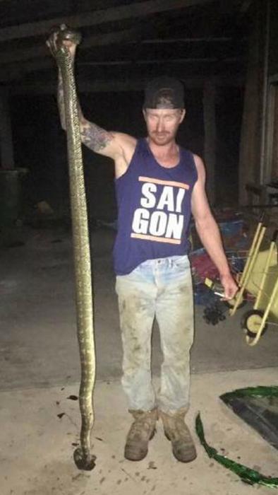 Serpiente pitón ataca niño en Australia
