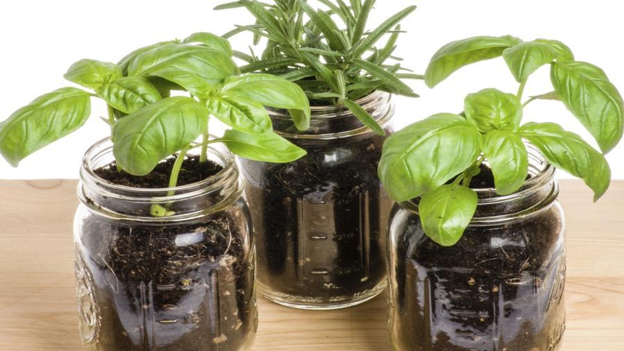frascos plantas