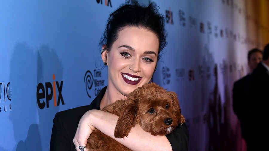 Katy Perry y su perrito Butters en el screening de Epix.
