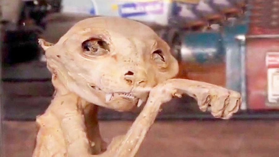 Extraña criatura es encontrada en Turquia