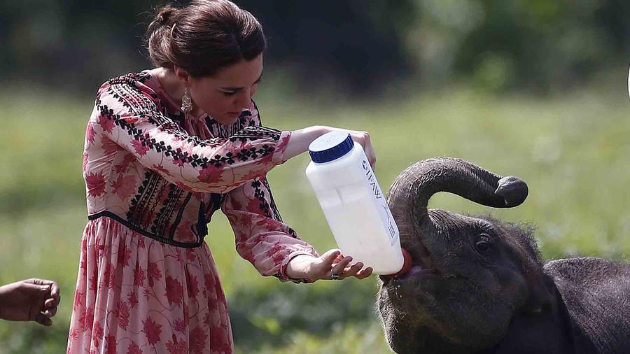 Kate Middleton alimentando a un elefante en India