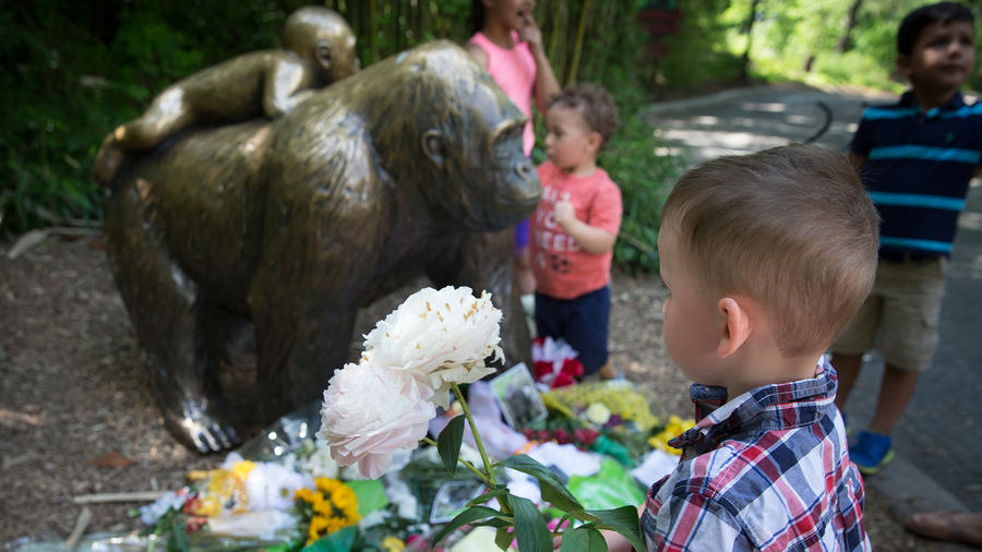 Un niño lleva flores para dejarlas junto a la estatua de un gorila ante el clausurado recinto de gorilas del Zoológico y Jardín Botánico Cincinnati, el lunes 30 de mayo de 2016 en Cincinnati, Ohio, EE.UU.