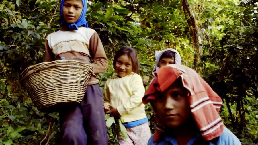 Niños granjeros en plantaciones de café