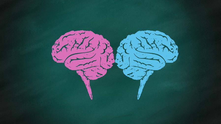 Cerebros rosado y azul