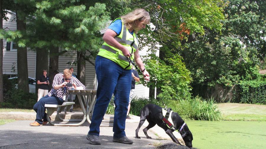 perros huelen excrementos humanos en agua en EEUU