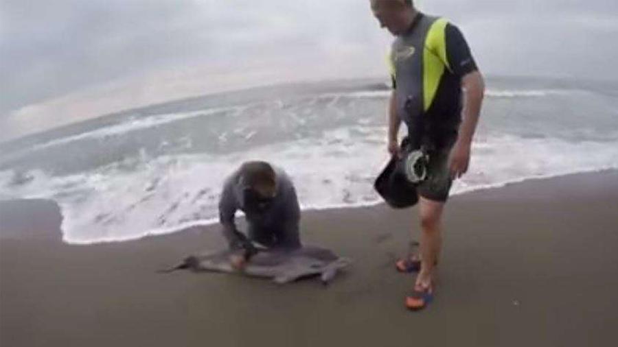 Un hombre pasó varias horas tratando de regresar un delfín varado al mar