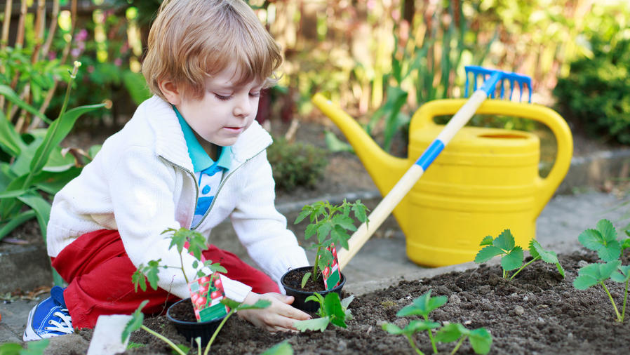 Niño plantando vegetales en huerto