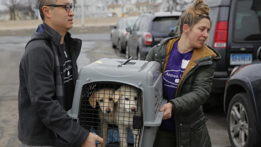 perros surcoreanos trasladados a nueva york