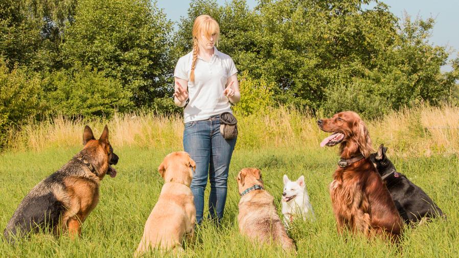 Mujer entrenando perros