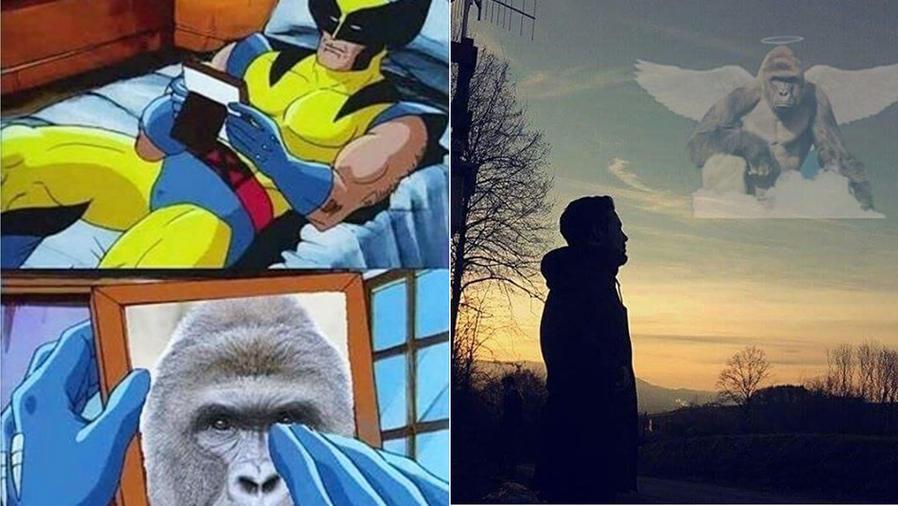Memes del gorila Harambe