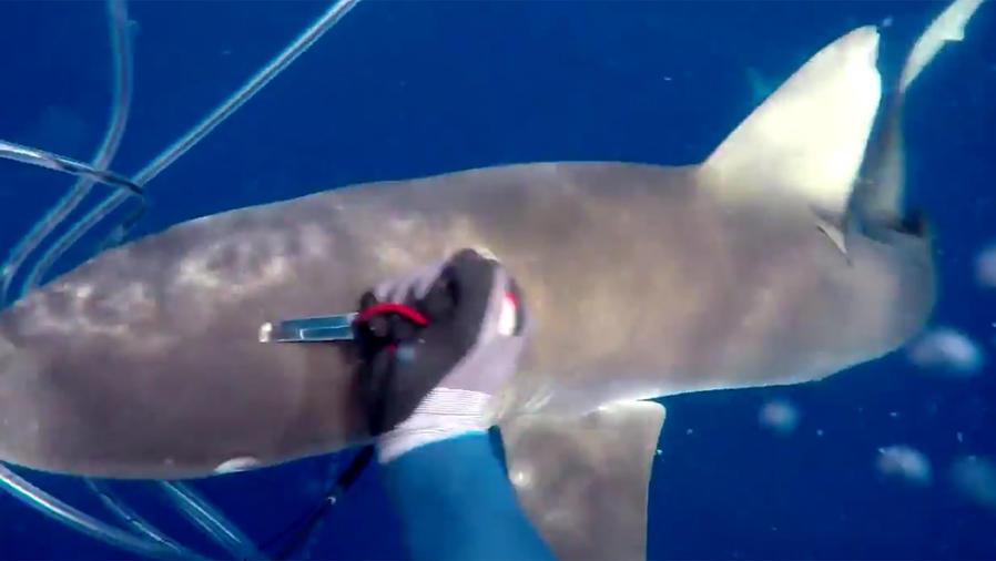 Apuñala a tiburones