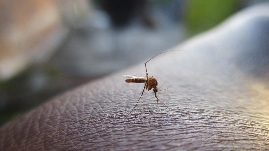 mosquito en piel